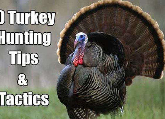 10 Turkey Hunting Tips And Tactics - SHTF & Prepping Central