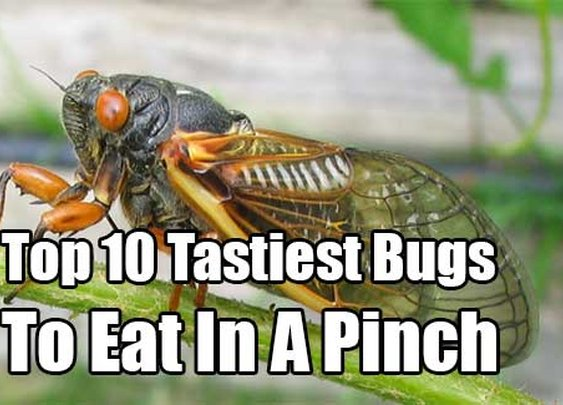 Top 10 Tastiest Bugs To Eat In A Pinch - SHTF & Prepping Central