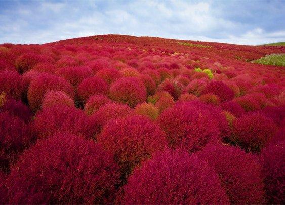 12 Most Beautiful Photos of Japan