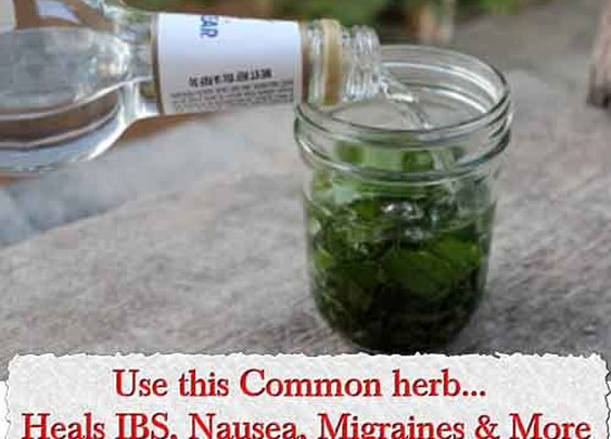 Use this Common herb... Heals IBS, Nausea, Migraines & More - LivingGreenAndFrugally.com