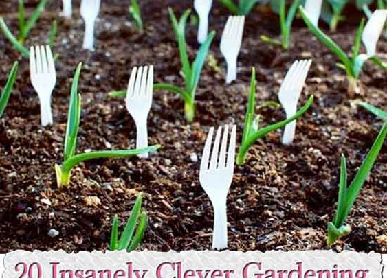 20 Insanely Clever Gardening Tips And Ideas - LivingGreenAndFrugally.com