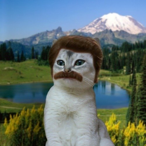 Parks and Recreation • gotsnacksonsnacks: CAT RON SWANSON...