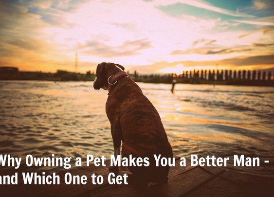 Why Owning a Pet Makes You a Better Man – and Which One to Get