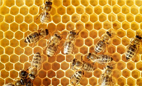 Why You Should Care About Bees (For Your Health)