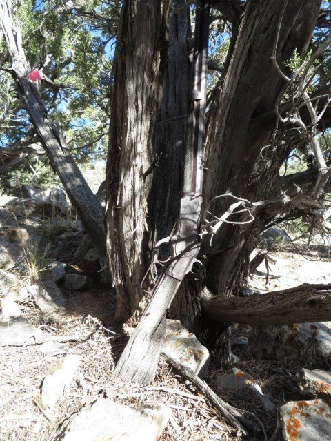 132-year-old Winchester rifle found propped against a national park tree