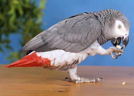 British parrot missing for four years returns speaking Spanish - Telegraph
