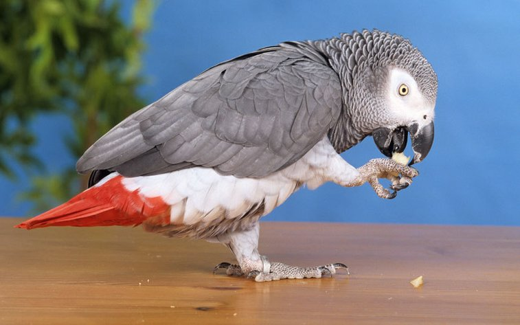 British parrot missing for four years returns speaking Spanish - Telegraph