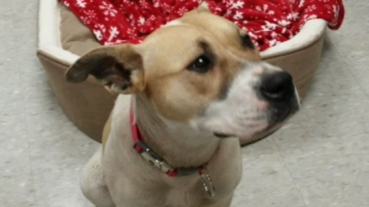 Dog left chained behind Roseville Walmart chews off paw to escape