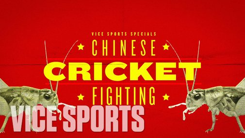 A Day of Cricket Fighting In Beijing: VICE Sports Specials - YouTube