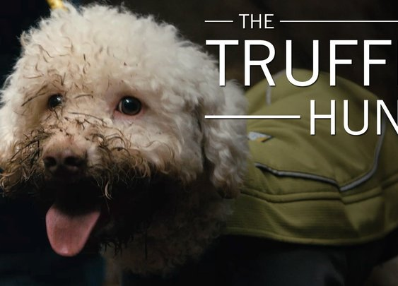 Watch America's Cutest Dogs Dig Up Truffle Gold - YouTube