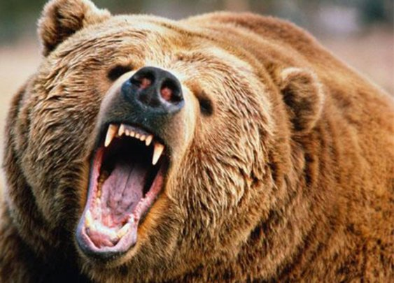 Would You Survive A Bear Attack?