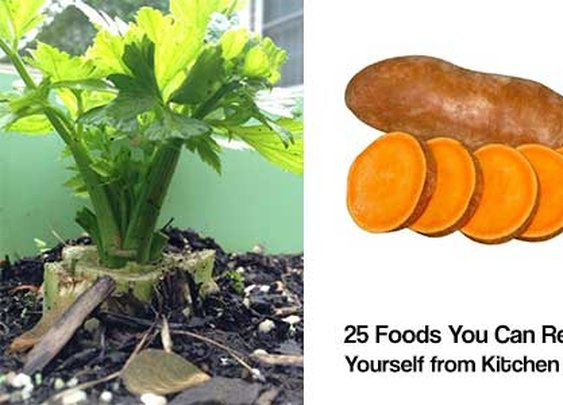 25 Foods You Can Re-Grow Yourself from Kitchen Scraps | iSeeiDoiMake