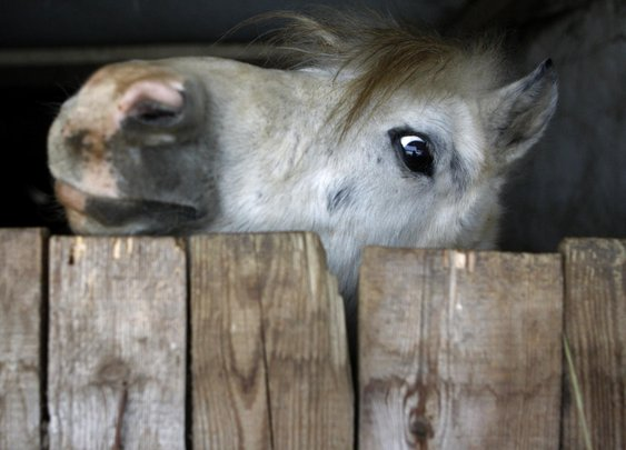 Entire Hungarian village for rent: includes horses, cows and a bus stop | World news | The Guardian