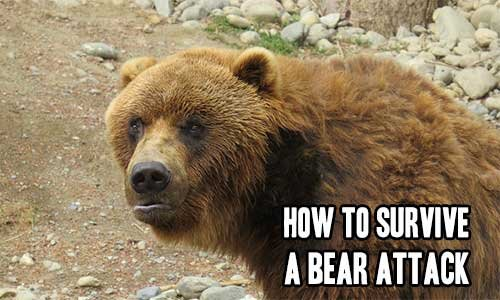 How to Survive a Bear Attack | iSeeiDoiMake