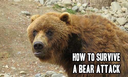 How to Survive a Bear Attack | iSeeiDoiMake