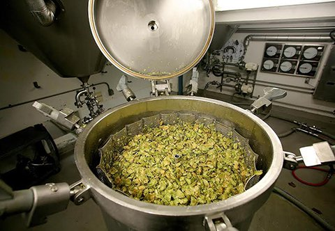 How the West Coast-Style IPA Conquered the World