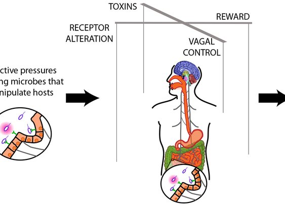 How Leaky Gut Connects Your Brain, Health, Food You Eat — Bauer Health Action