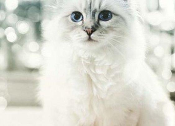 Karl Lagerfeld's Cat Made Over 3 Million Euros in 2014