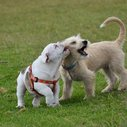 How to Read Dog Body Language | WOOFipedia by The American Kennel Club