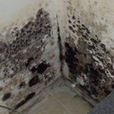 How To Remove Black Mold From Your Basement