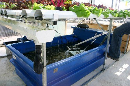 How To Build A DIY Aquaponics System