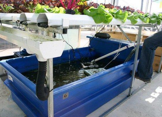 How To Build A DIY Aquaponics System