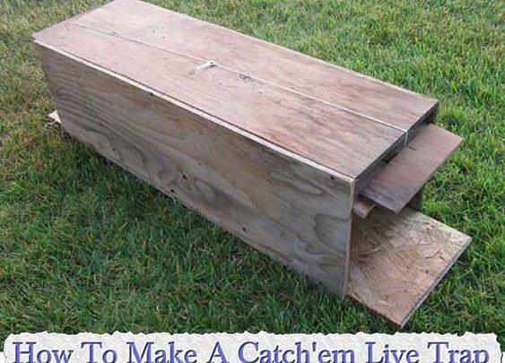 How To Make A Catch'em Live Trap