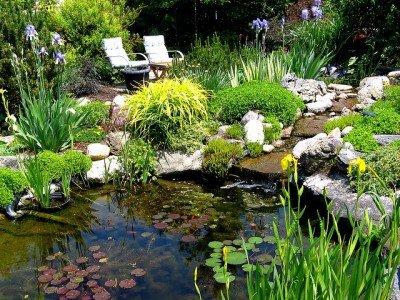 How To Build A Backyard Pond DIY