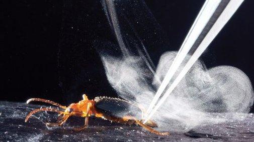 Secrets of Bombardier beetle's superheated defensive spray revealed