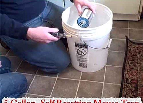 5 Gallon, Self-Resetting Mouse Trap