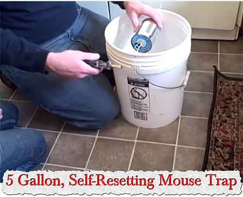 5 Gallon Self Resetting Mouse Trap Gentlemint