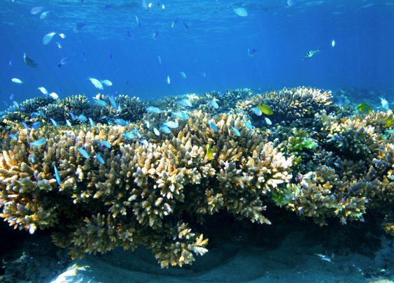 Ningaloo Reef AU