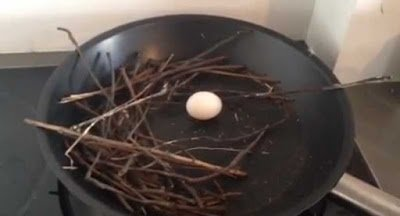 Pigeon laid egg in man's frying pan | Not really trying