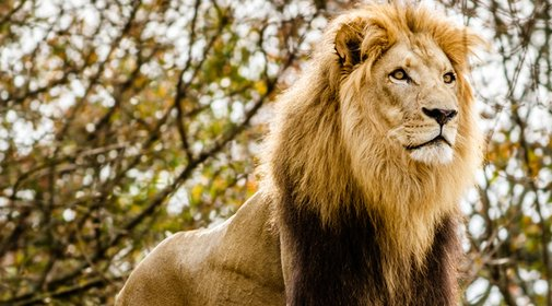 Escaped Lion Is Terrorizing Milwaukee, And Its Tweets Are Slammin'