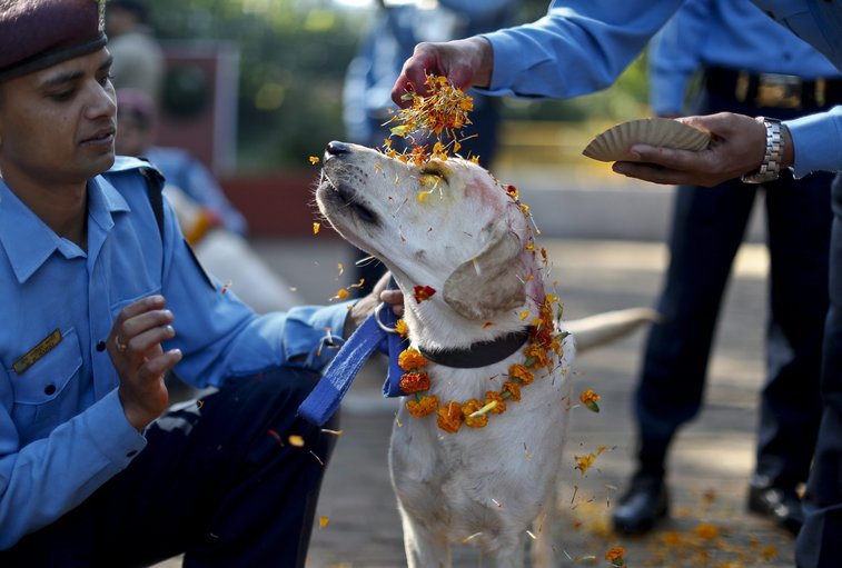 Police dogs honored in Nepal festival | The Seattle Times