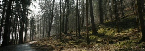 I'm Publishing my Faërie Romance: On the Edges of Elfland! « Letters from the Edge of Elfland