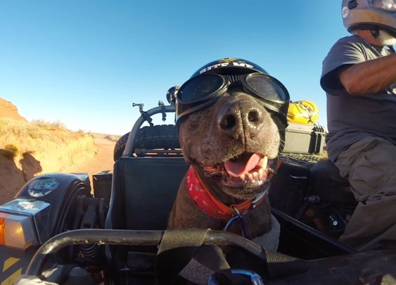 "GoPro: Ara and Spirit ""The Sidecar Dog"""