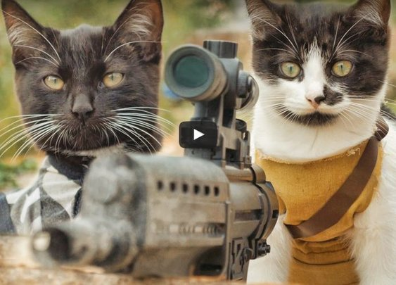 Cats vs.Zombies