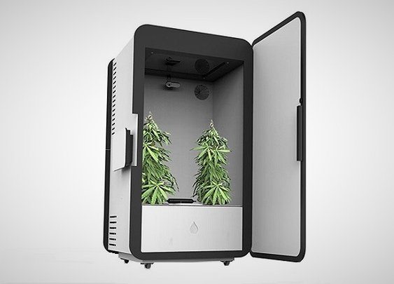 Leaf Cannabis Growing System - Men's Gear
