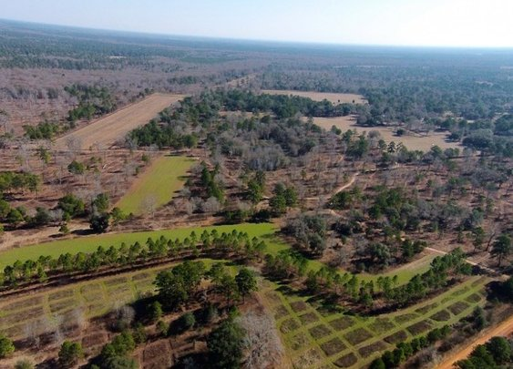 Cane Mill Plantation For Sale
