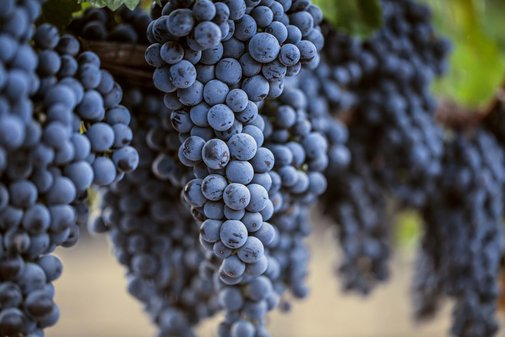 Can A Hashtag Save Merlot? | Food Republic