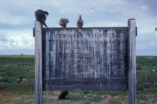 When The Western World Ran on Guano | Atlas Obscura