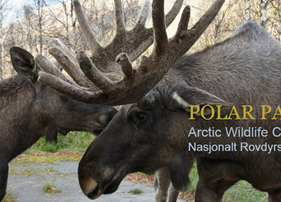 Hunter shoots 2 moose with one bullet… in a zoo