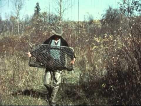 Idaho Parachuting Beavers - Caught on Film