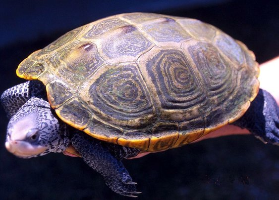 Man arrested with 51 live turtles in his pants / Boing Boing