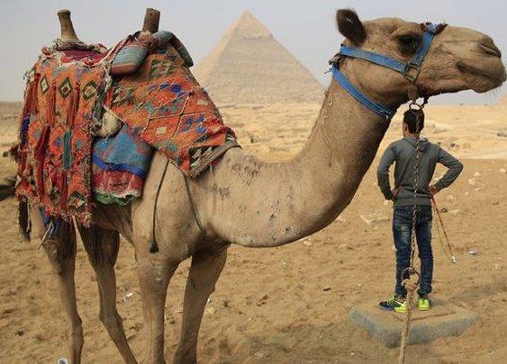 Saudi man's family calls for divorce after wife kisses camel