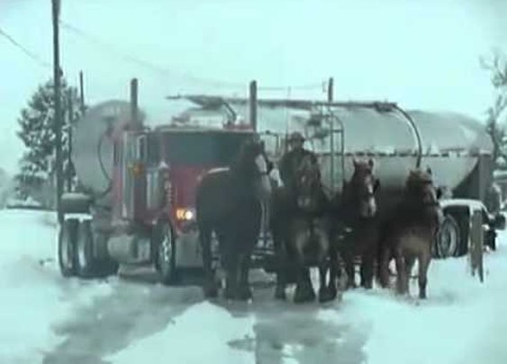 Horses Pull Out Semi Truck Stuck In Snow Bank