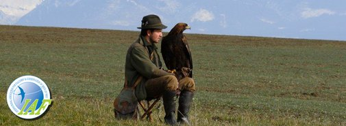 International Association for Falconry and Conservation of Birds of Prey - Home