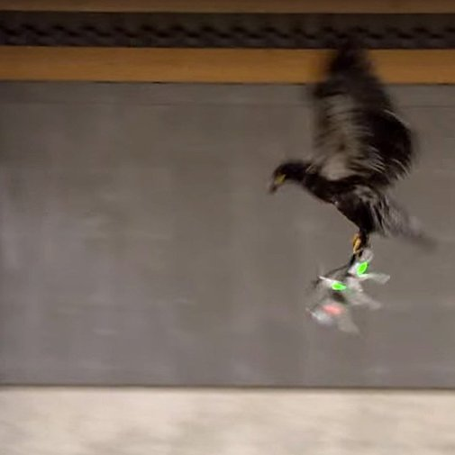 Police train eagles to take down drones on sight (Wired UK)