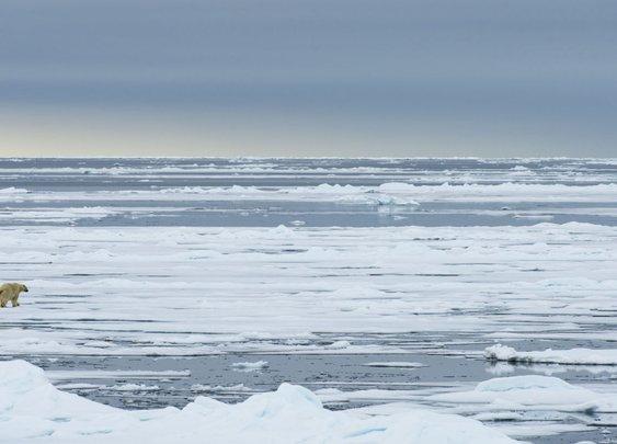 Marooned Among the Polar Bears